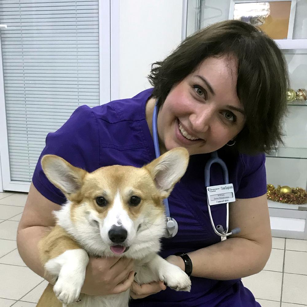 Как лечить мочекаменную болезнь (МКБ) у собаки? 3   ВЕТКУПОН - всё о животных: новости, ветуслуги, зоотовары в Москве